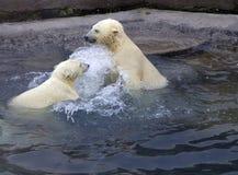 Rusland. De dierentuin van Moskou. De ijsbeer. Royalty-vrije Stock Afbeelding