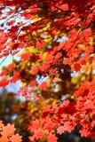 Rusland. De herfst. 27 stock afbeelding