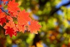 Rusland. De herfst. 29 stock foto's