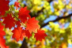 Rusland. De herfst. 37 stock afbeelding