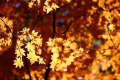 Rusland. De herfst. 38 stock afbeelding