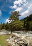 Rusland. De Kaukasus. De rivier van Zelenchuk. stock foto's