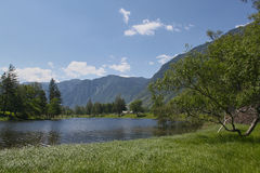 Rusland Het landschap van de Altayskyberg in de zomer Stock Foto's