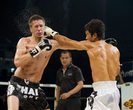 Russe gegen koreanischen siamesischen Boxer in Bangkok stockbild