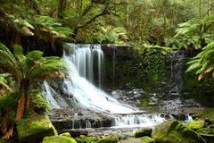 Russel cai parque nacional do campo do Mt, Tasmânia, Aus imagem de stock royalty free