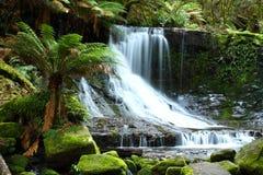 Russel cai parque nacional do campo do Mt, Tasmânia, Aus Foto de Stock