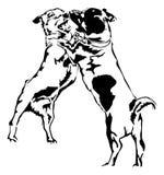 Russel för två stålar Terrier Arkivfoto