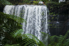 Russel Falls in Mount Field National Park. Stock Photography