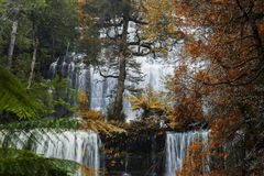 Russel Falls in Mount Field National Park. Stock Photos