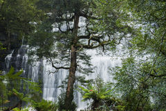 Russel Falls in Mount Field National Park. Royalty Free Stock Photos