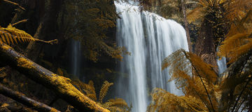 Russel Falls in Mount Field National Park. Stock Images