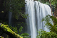 Russel Falls in Mount Field National Park. Royalty Free Stock Images