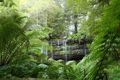 Russel Falls Mt Field National Park, Tasmania, Aus Royalty Free Stock Images