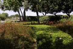 Russelia в саде Стоковое фото RF