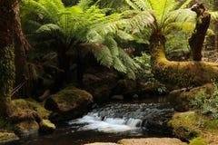 Russell Creek im Berg-Feld-Nationalpark Stockfotografie