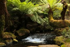 Russell Creek In Mount Field National Park Stock Photography