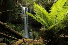 Russell Falls Mount Field National-Park Lizenzfreies Stockfoto