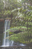 Russell Falls, Mount Field National park, Tasmania, Australia Stock Photography