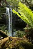 Portrait of Russell Falls. Russell Falls in Mount Field National Park Tasmania.  Short drive from Hobart Royalty Free Stock Photo
