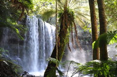 Russell Falls, Tasmania. The beautiful Russell Falls in Mount Field National Park, Tasmania Stock Photos
