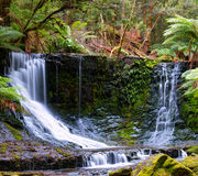 The Russell Falls. Tasmania, Australia. The Russell Falls, a tiered–cascade waterfall on the Russell Falls Creek, is located in the Central Highlands region Stock Image