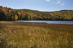 Russell Pond peat bog with fall foliage, New Hampshire. Royalty Free Stock Image