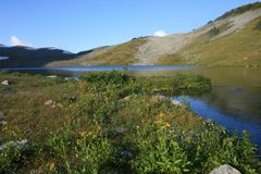 Russet Lake Morning with Wildflowers Royalty Free Stock Photography