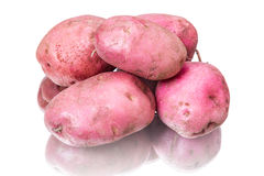 Russet potato Royalty Free Stock Photography
