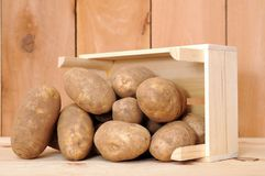 Russet potato. With crateon wooden shelf stock images