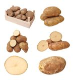 Russet potato. With crate isolate on white stock photo