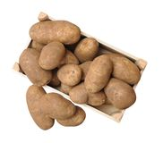 Russet potato Royalty Free Stock Images