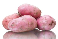 Russet potato on white Stock Images