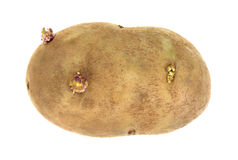 Russet Potato On White Royalty Free Stock Photography