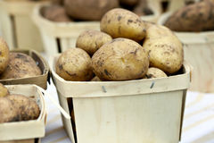 Russet Potatoes Royalty Free Stock Image