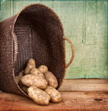 Russet potatoes spilling out of basket Royalty Free Stock Photo