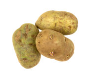 Russet Potatoes On White Stock Images