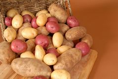 Russet, red and white potatoes spilling out of a basket onto cut Royalty Free Stock Images