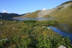 russet wildflowers πρωινού λιμνών Στοκ φωτογραφία με δικαίωμα ελεύθερης χρήσης