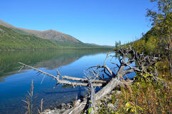 Russia, Altai territory, Ust-Koksinsky district, middle Multinskoye lake in sunny day Stock Photography