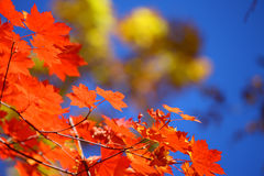 Russia. Autumn. 31. Vladivostok. Russia. Far-East. Botanic park Stock Images