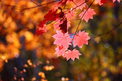 Russia. Autumn. 32. Vladivostok. Russia. Far-East. Botanic park Royalty Free Stock Photo