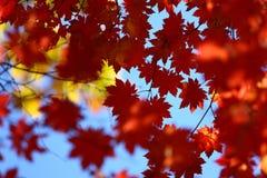 Russia. Autumn. 40 Royalty Free Stock Photos