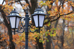 Russia. Autumn. 59. Vladivostok. Russia. Far-East. Botanic park Stock Images