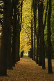 Russia. Avenue of golden trees Royalty Free Stock Photography
