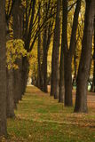 Russia. Avenue of golden trees Stock Photo
