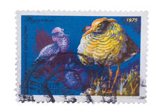 RUSSIA - CIRCA 1975: A stamp printed by shows bird an Mal. RUSSIA - CIRCA 1975: A stamp printed by Russia shows bird an Male Ruffs from the series Berezina River royalty free stock photo