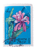 RUSSIA - CIRCA 1971: a stamp printed in the shows Floweri. RUSSIA - CIRCA 1971: a stamp printed in the Russia shows Flowering Crab Cactus, Schlumbergera, circa royalty free stock photography