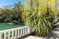 Russia city of Sochi Adler district park Southern cultures. Pond with reflection of trees.  stock image