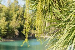 Russia city of Sochi Adler district park Southern cultures. A pond with trees.  royalty free stock image