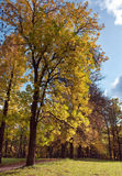 Russia,Gatchina, bright autumn tree in park Royalty Free Stock Images